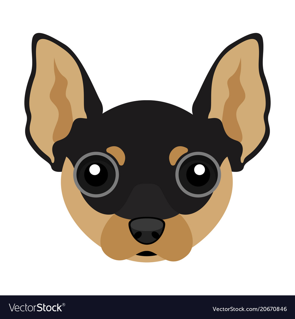 Cute chihuahua dog avatar vector image