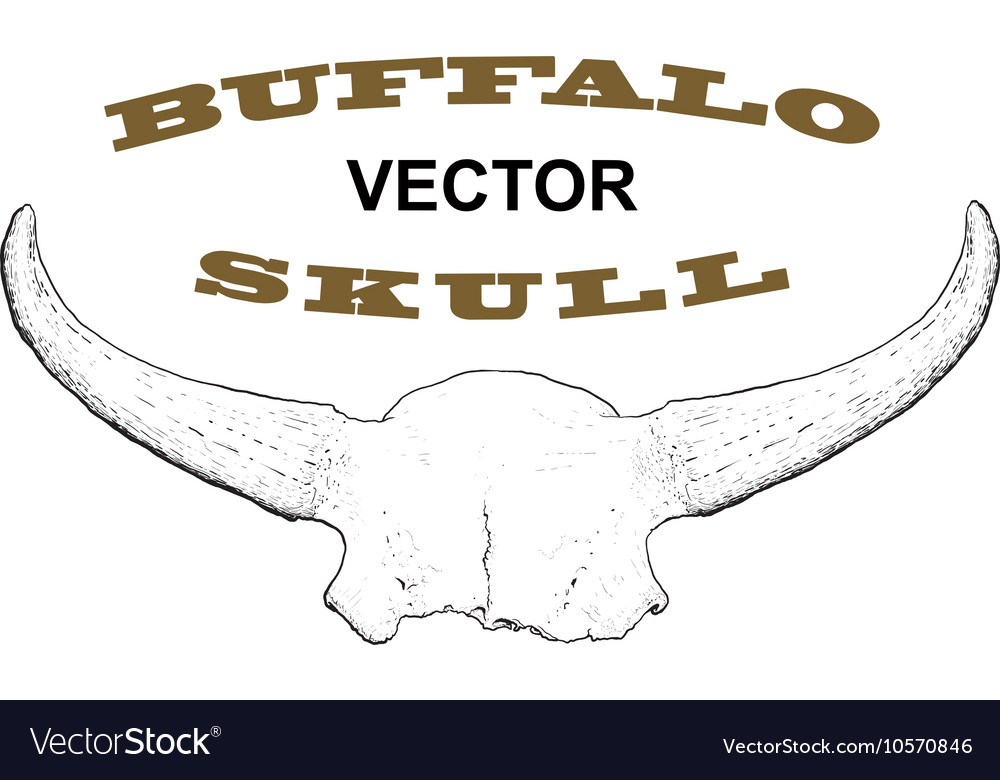 Old Buffalo Skull