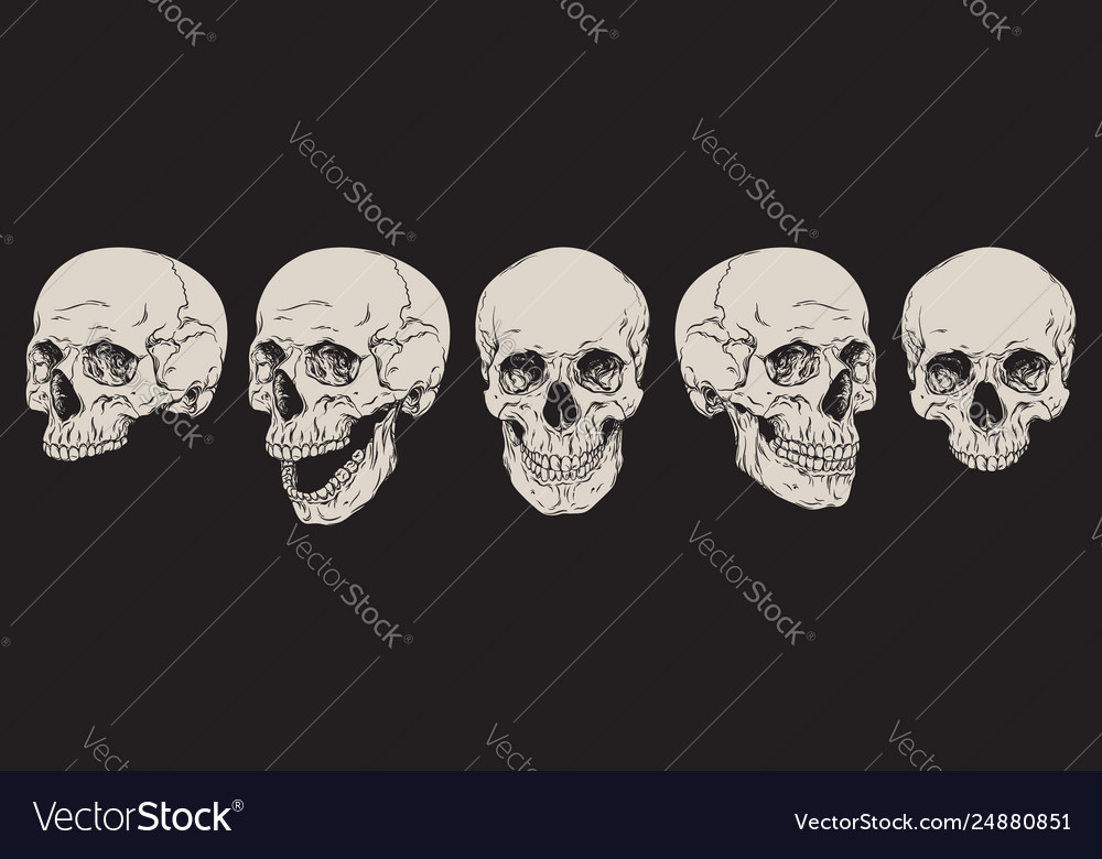 Anatomically correct human skulls set isolated