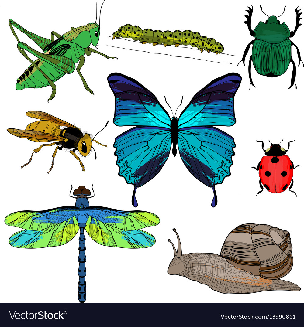Colorful drawing insects collection