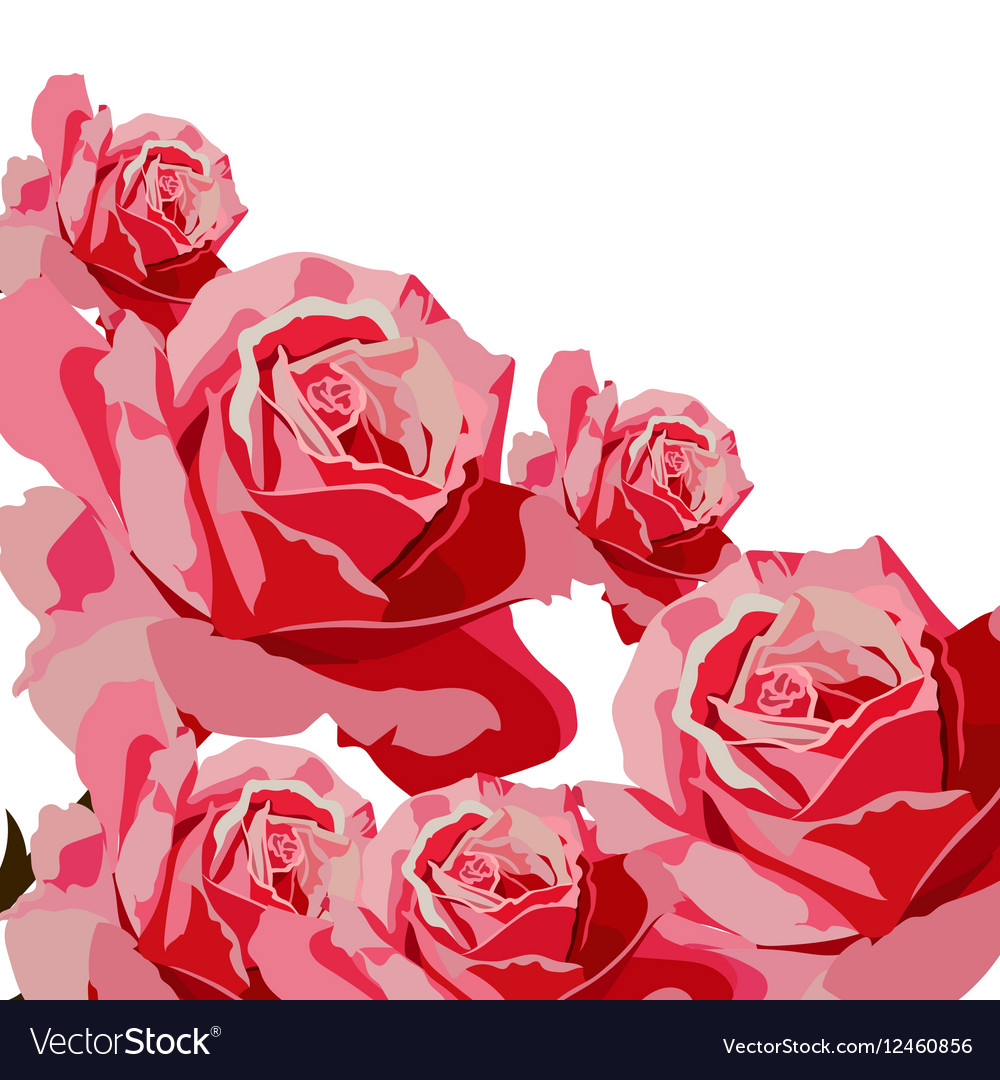 Delicate Pink Roses bouquet card vector image