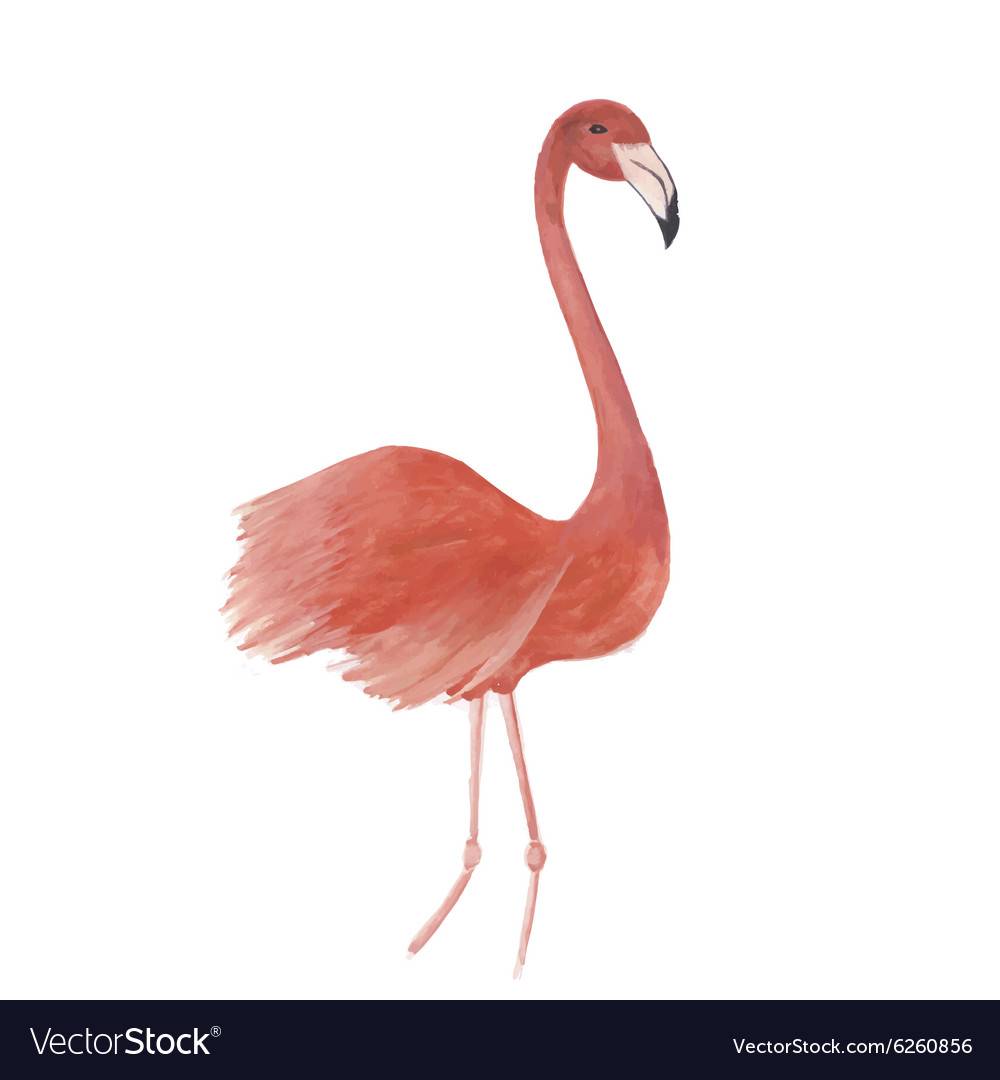 Flamingo watercolor isolated bird