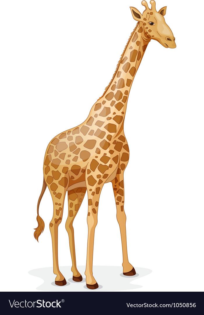 giraffe royalty free vector image vectorstock rh vectorstock com girafe vectoriel giraffe vector free download