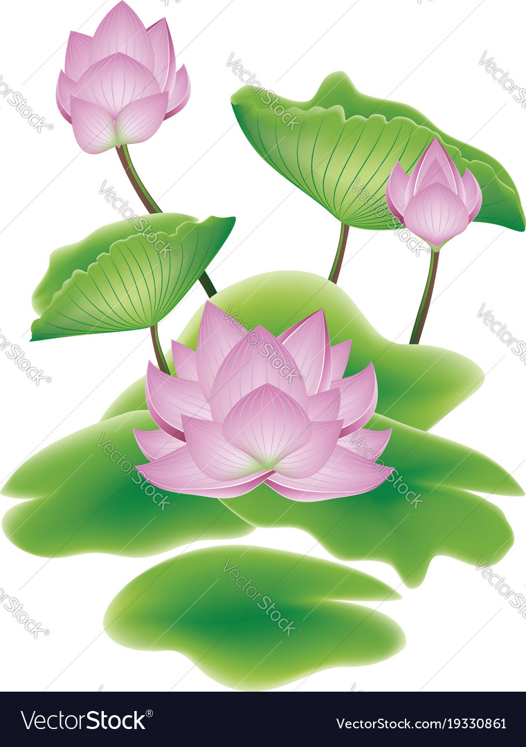 Lotus Flower With Leaves Royalty Free Vector Image