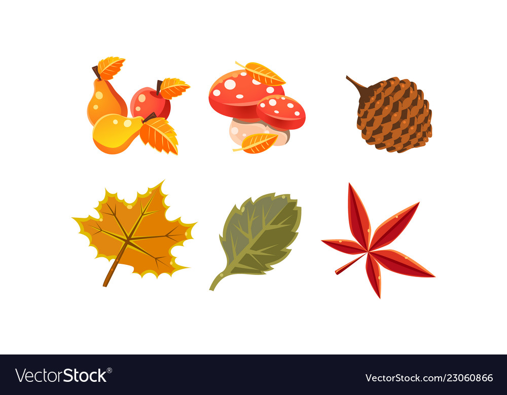 Collection of bright colorful autumn leaves and