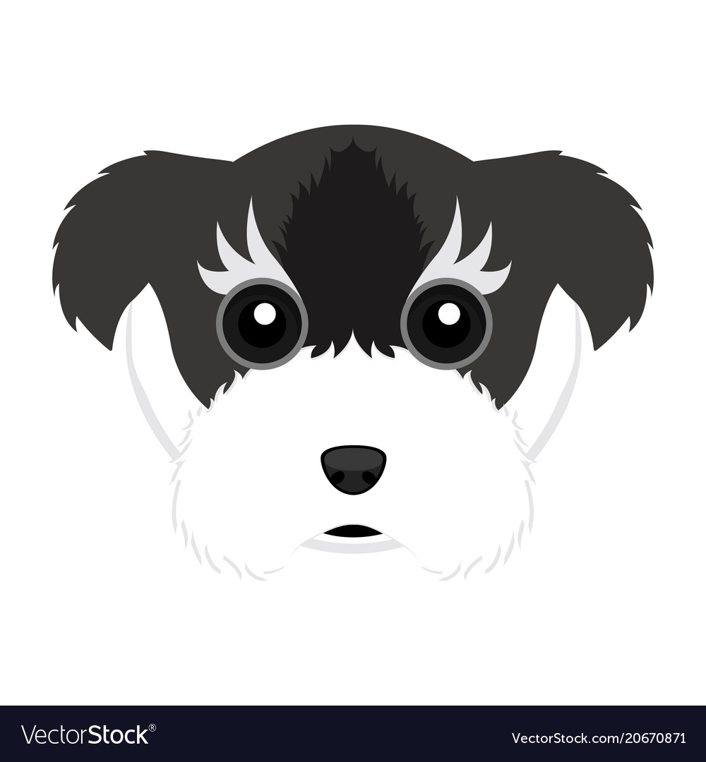 Cute schnauzer dog avatar
