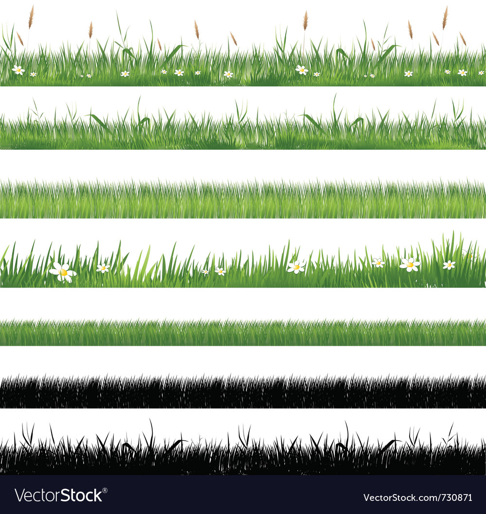 Green grass collection vector image