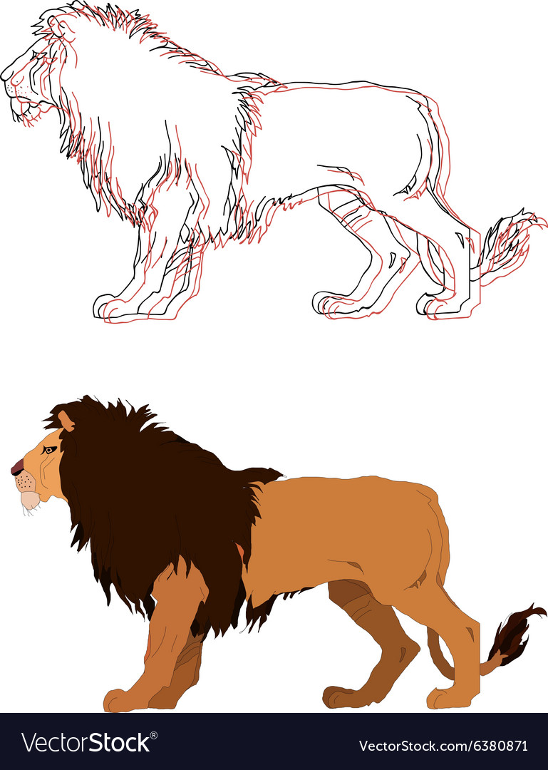 Lion king isolated animal