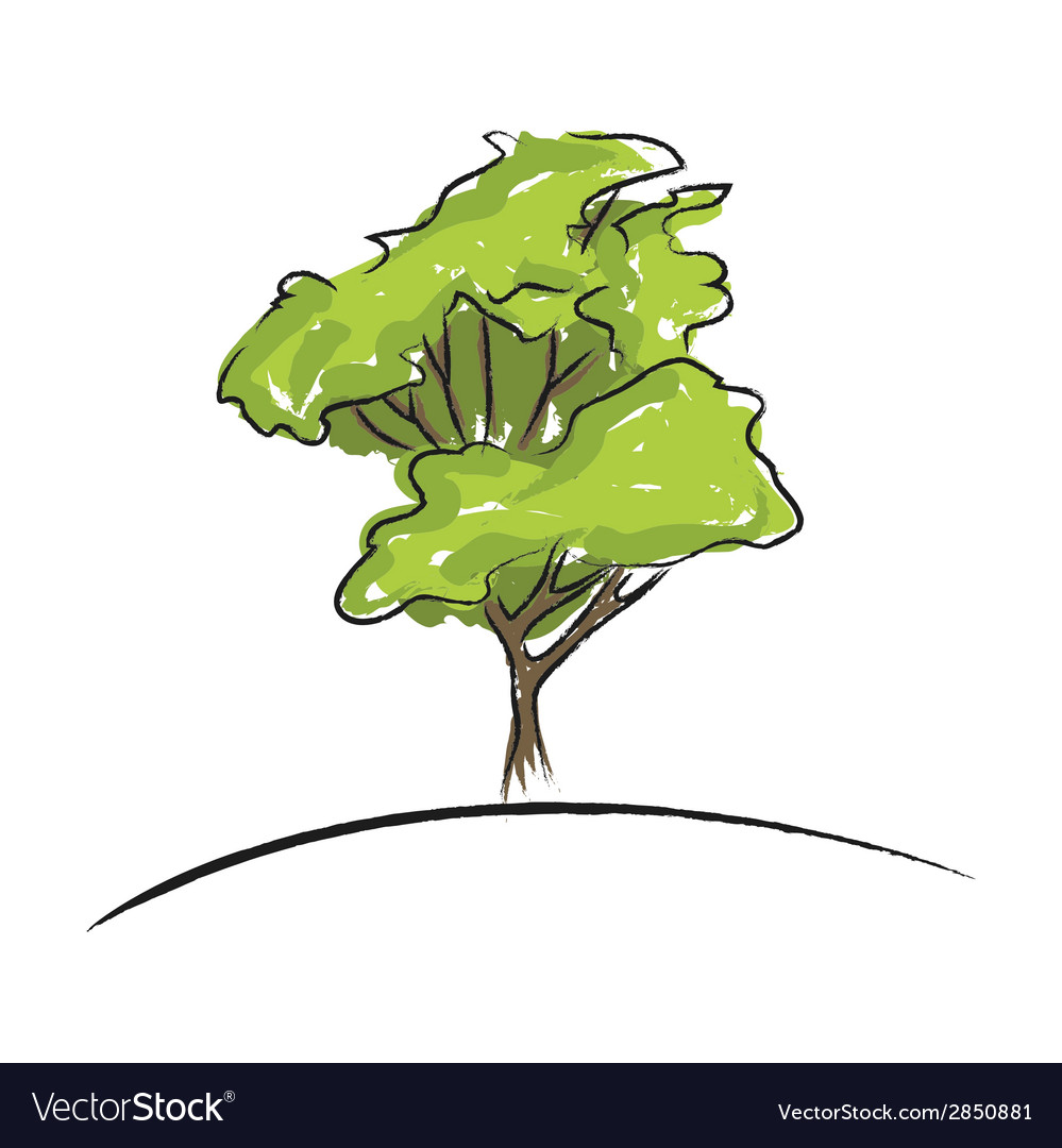 Big Tree Drawing Royalty Free Vector Image Vectorstock