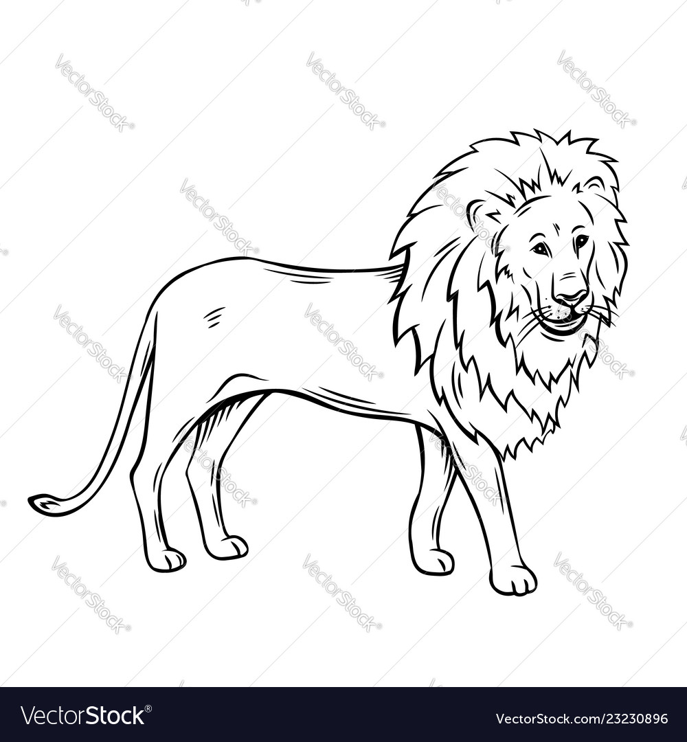 Outline Lion Icon Royalty Free Vector Image Vectorstock 3x3 4x4 5x7 available in the. vectorstock