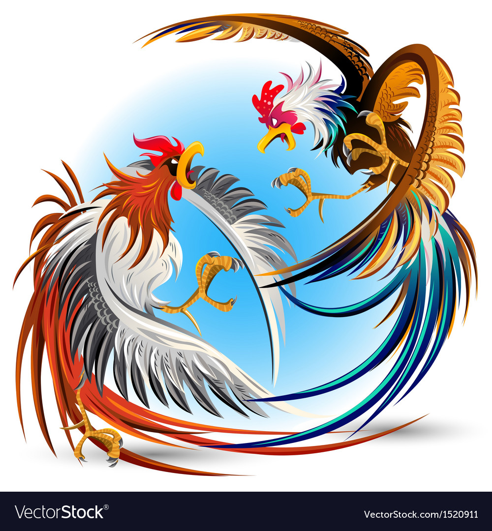 Cockfight Fighting Cocks vector image