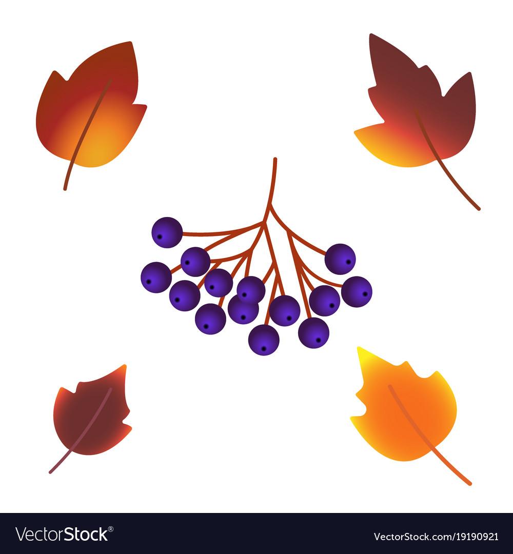 Autumn leaf foliage icons of oak acorn maple or