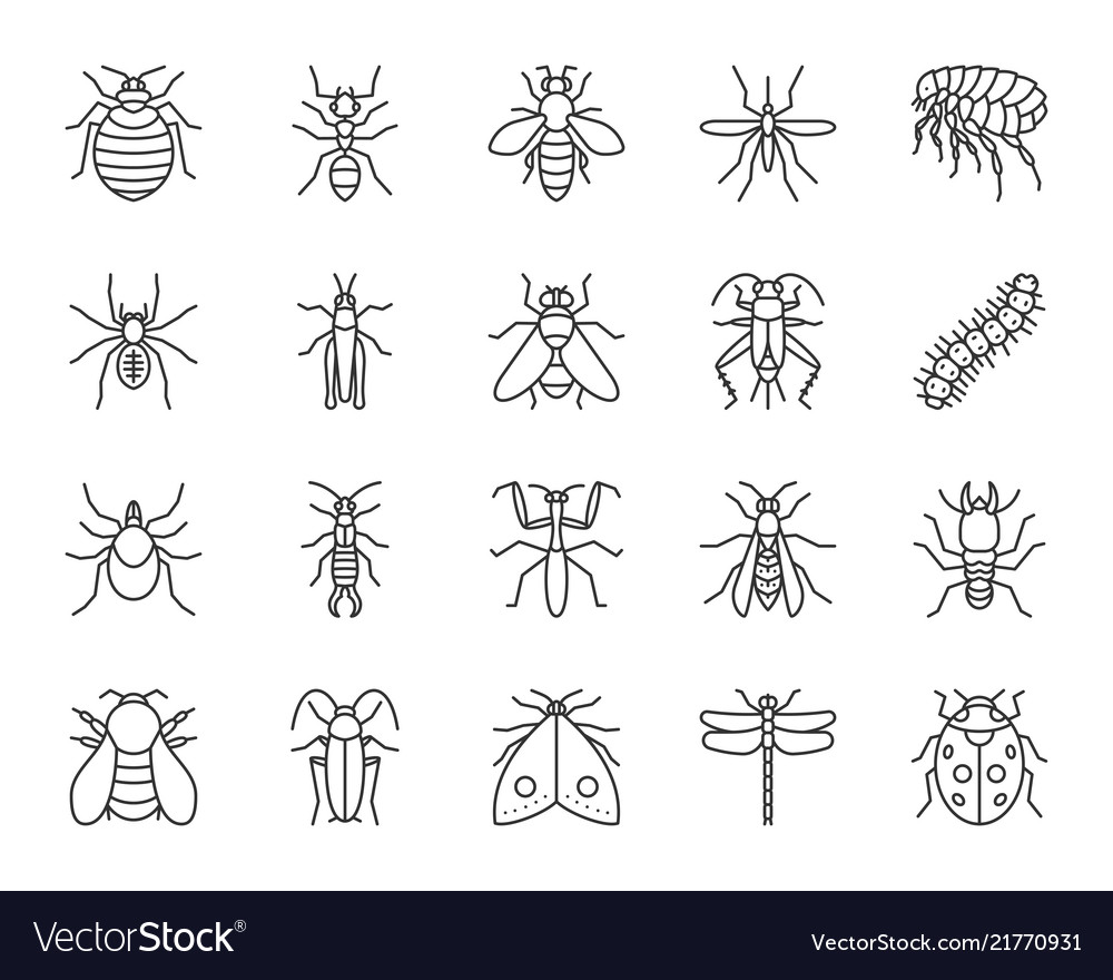 Danger insect simple black line icons set