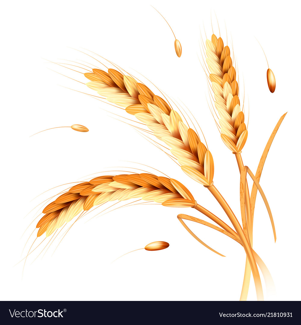 Wheat spikes realism