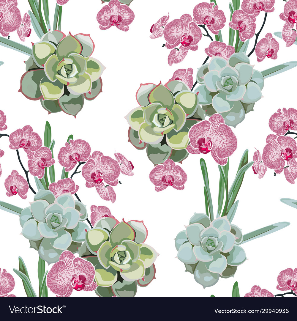Wallpaper Pink Orchid And Green Succulent Vector Image