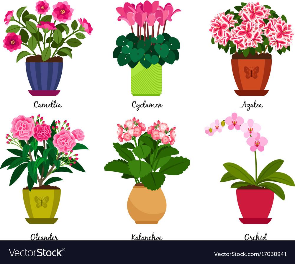 Houseplant flowers in pots vector image