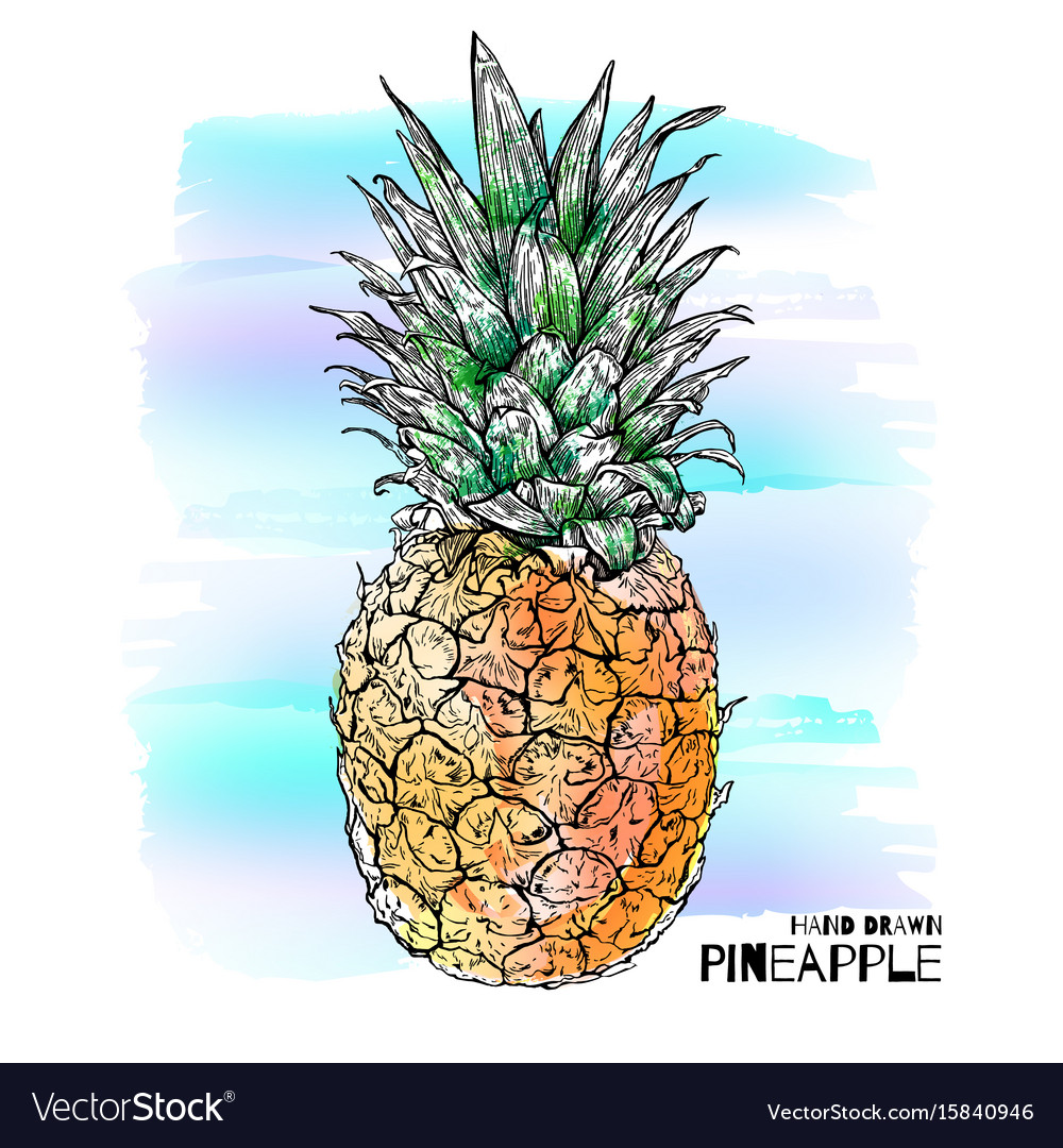 Hand drawn with ink colorful pineapple vector image