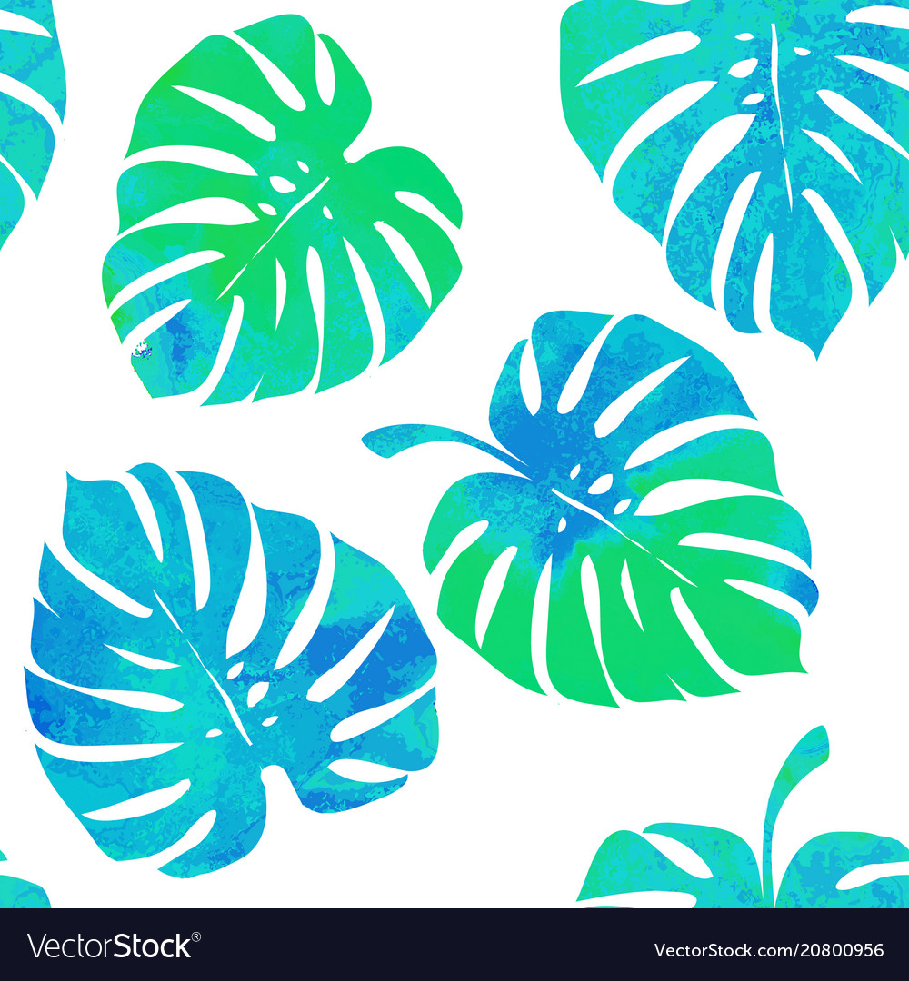 Tropical leaves monstera on a white background