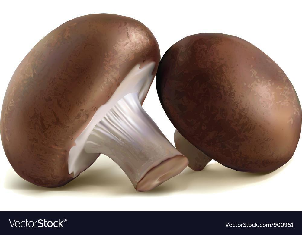 The champignon mushrooms