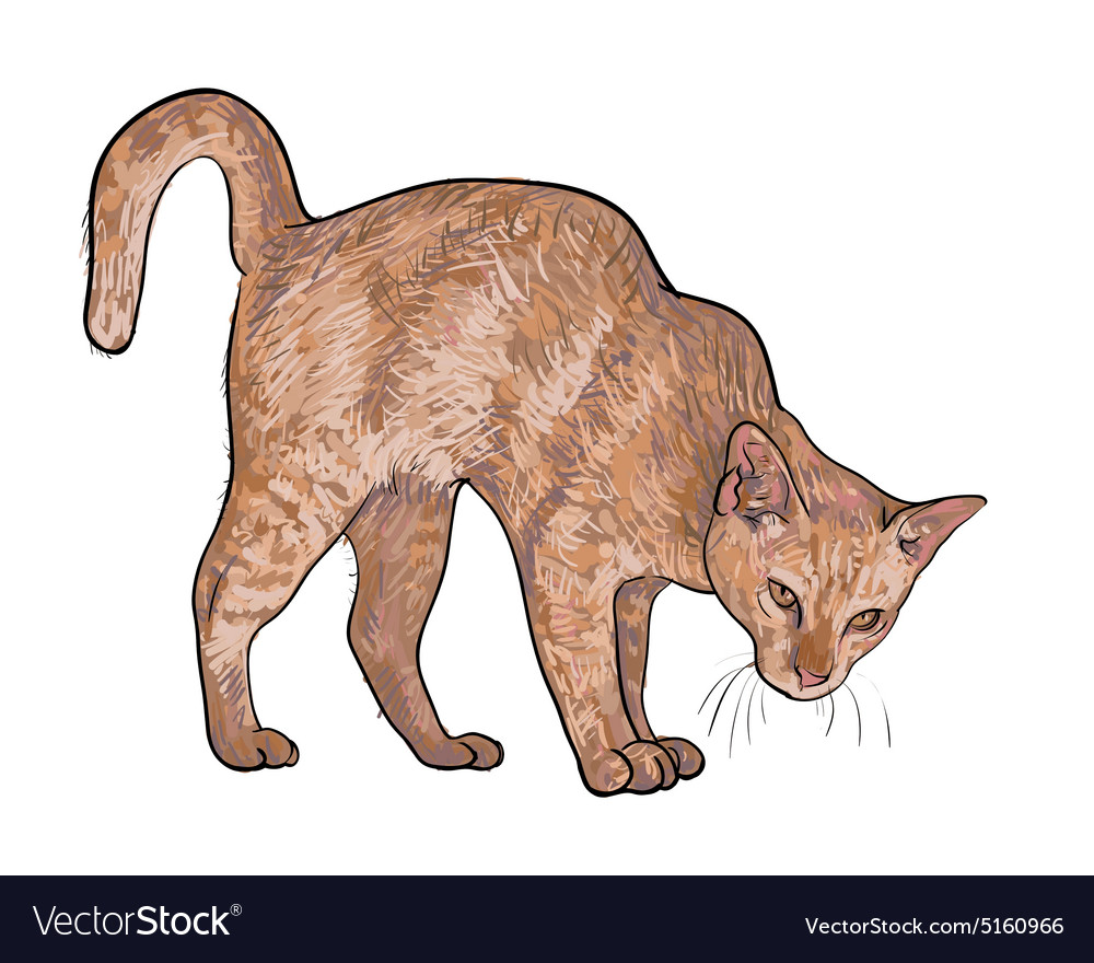 Drawing of threaten cat