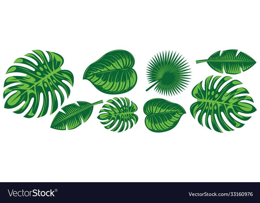 Set various tropical leaves design elements