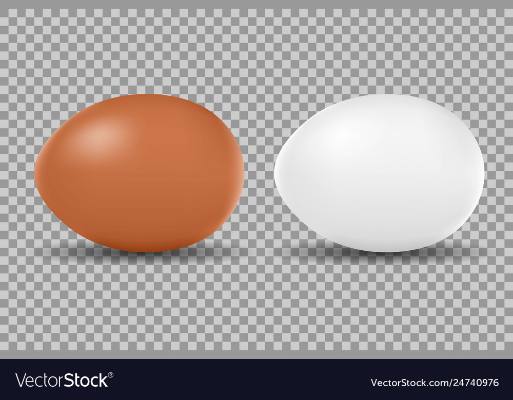 Two realistic chicken white and brown eggs