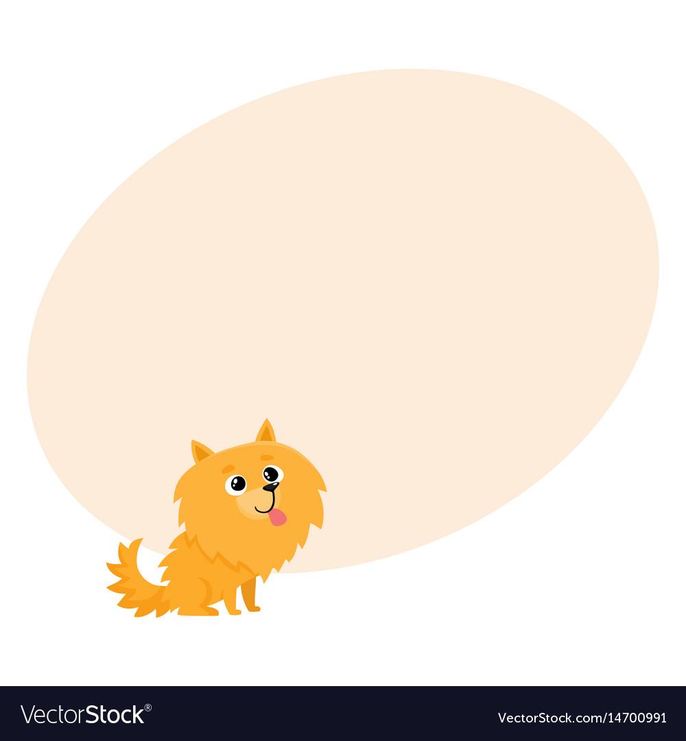 Cute little long haired pomeranian spitz dog vector image
