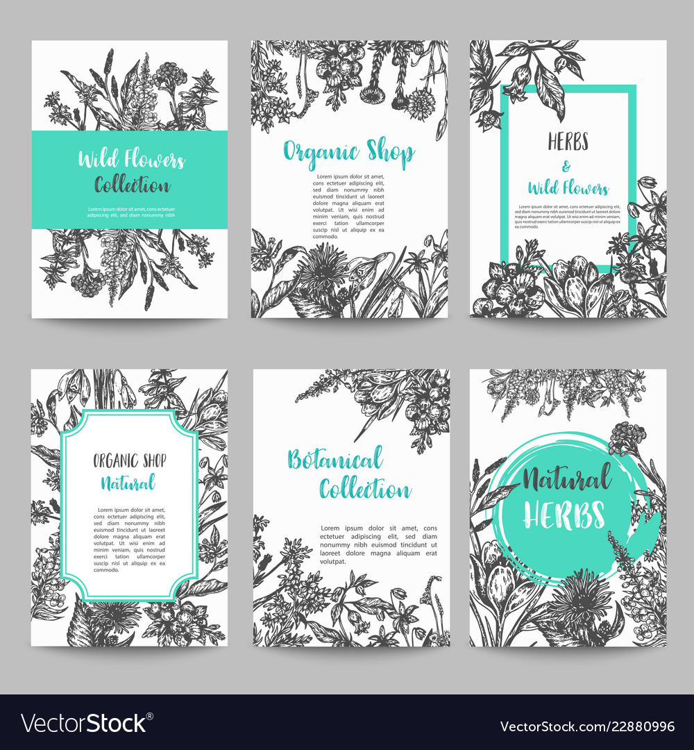 Set card with hand drawn herbs and wild flowers