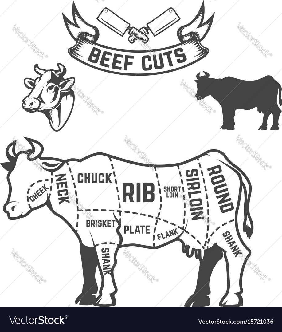 Beef Cuts Butcher Diagram Cow On White Background Vector Image