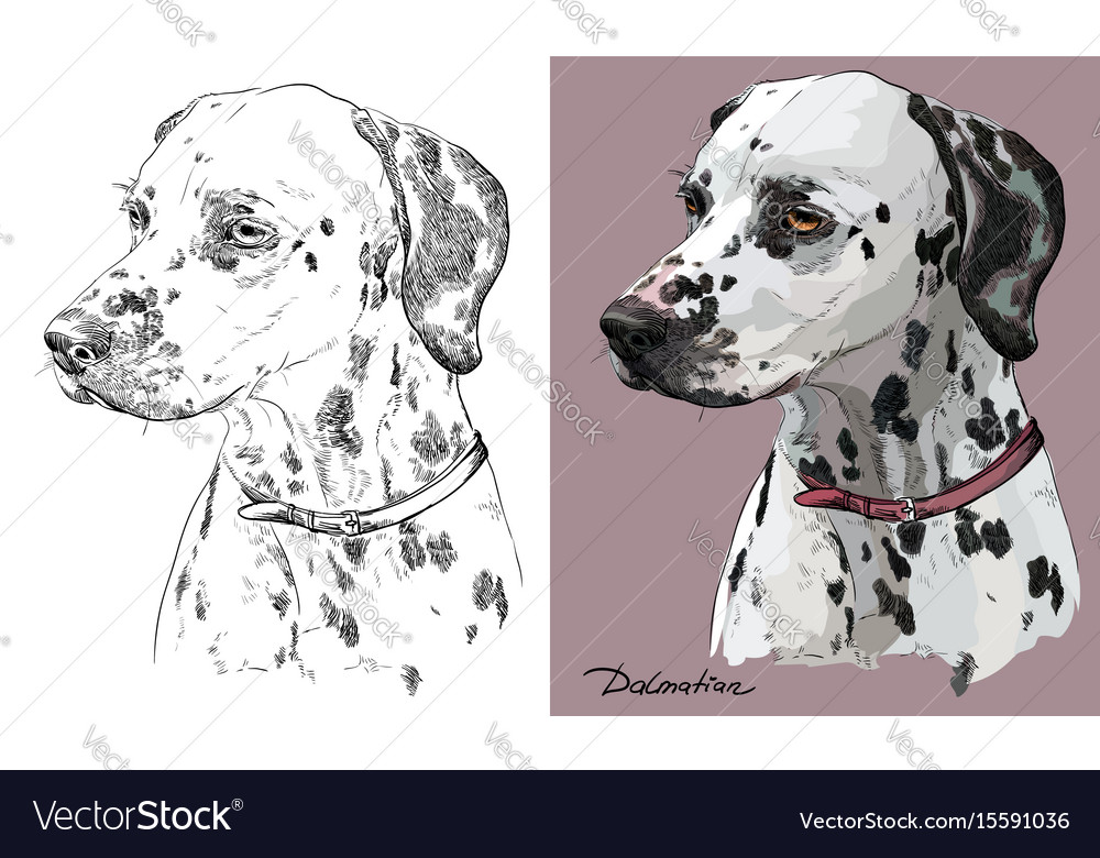 Colorful and monochrome hand drawing portrait of vector image