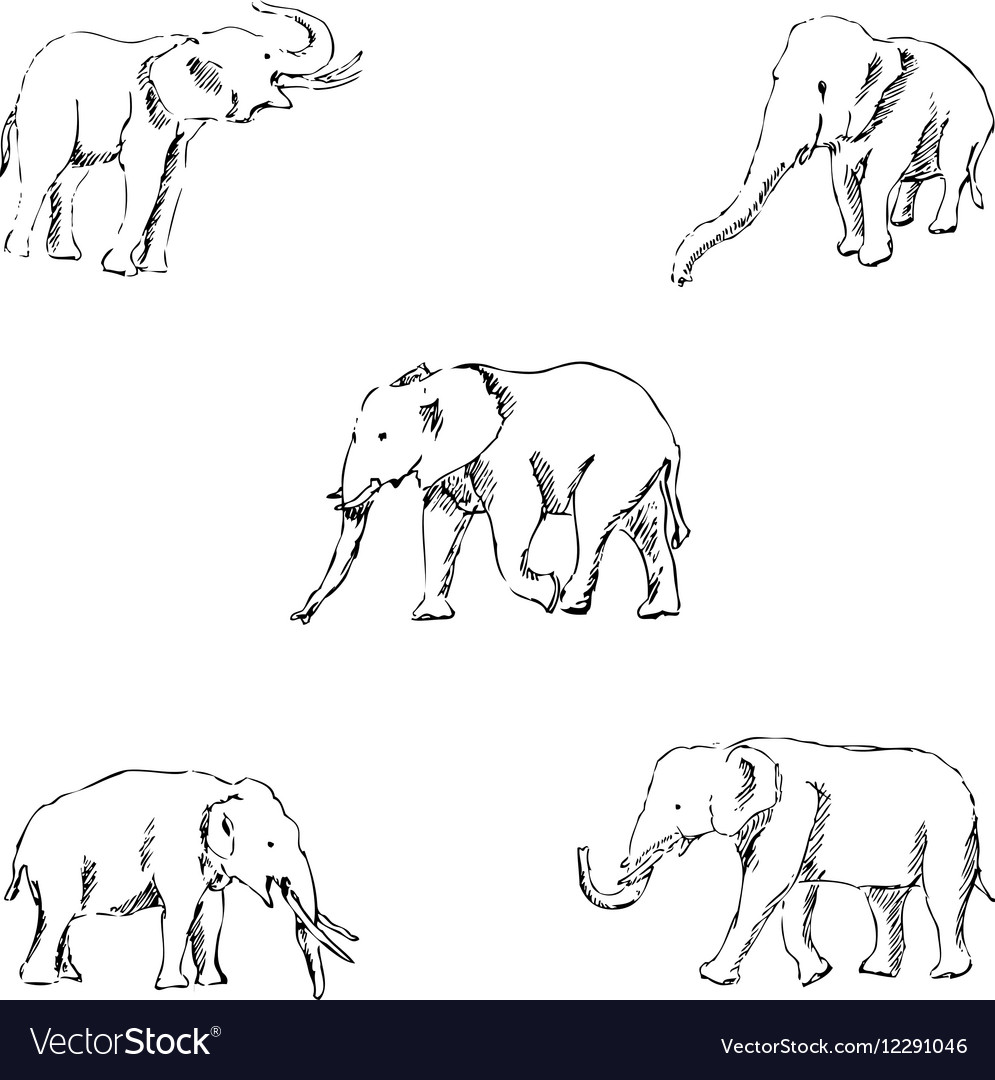 Elephants a sketch by hand pencil drawing