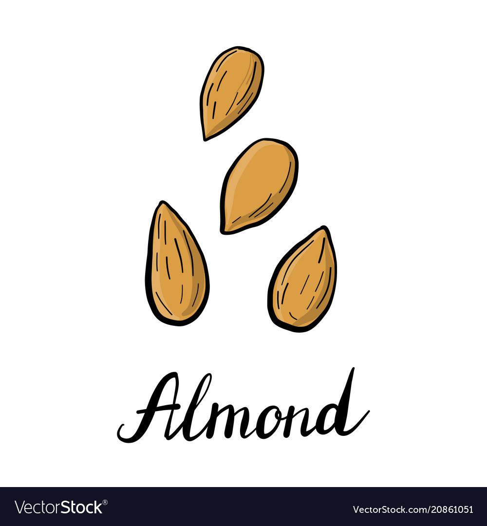 Drawing almond