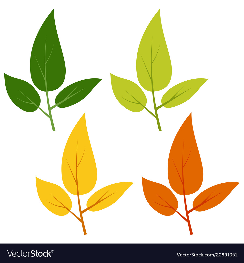Set of green yellow and red leaves