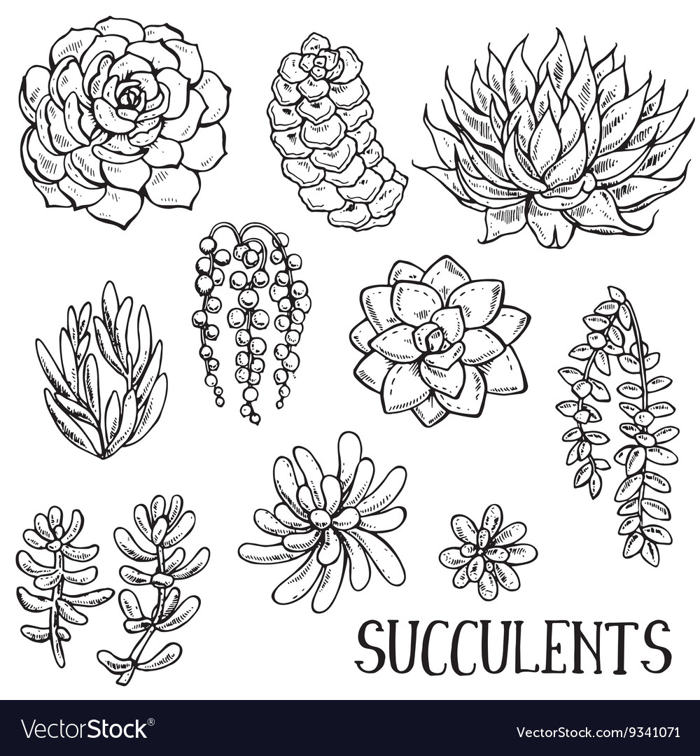 Hand Drawn Succulent Plants Set Royalty Free Vector Image