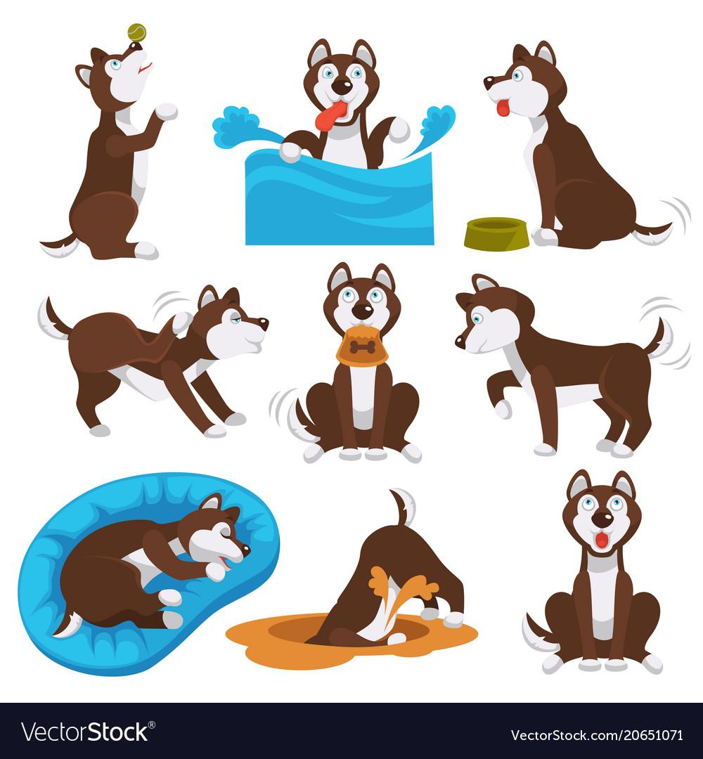 husky dog cartoon pet playing or training vector image