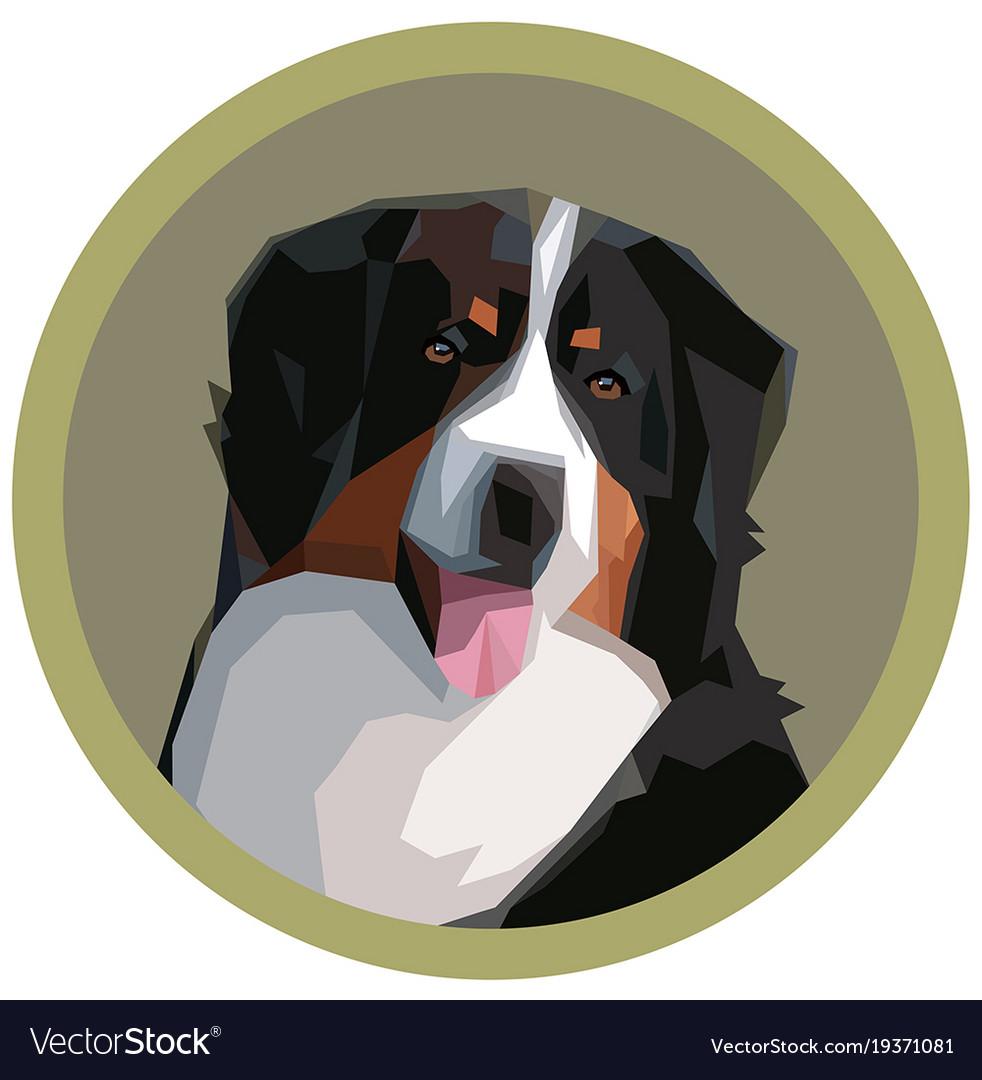 Portrait a bernese mountain dog