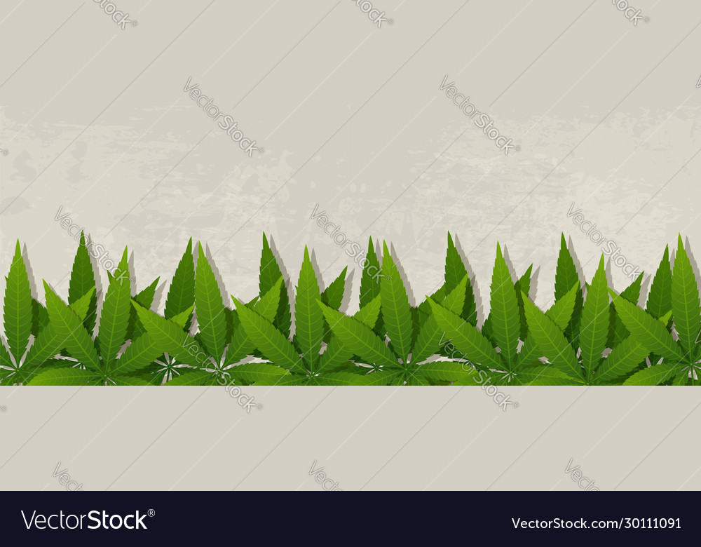 Grunge banner with cannabis leaves