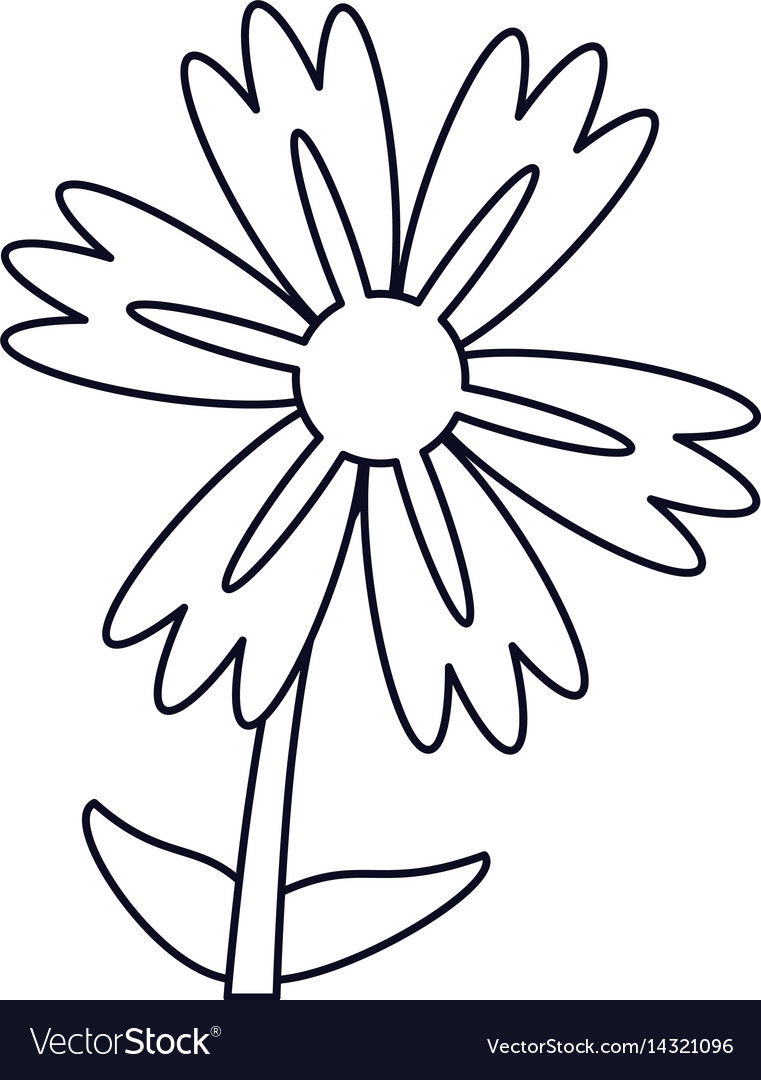 Lily Flower Natural Outline Royalty Free Vector Image