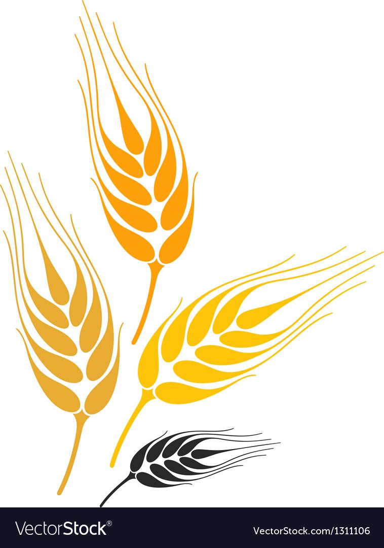 barley royalty free vector image vectorstock rh vectorstock com barley vector free download barley vector art
