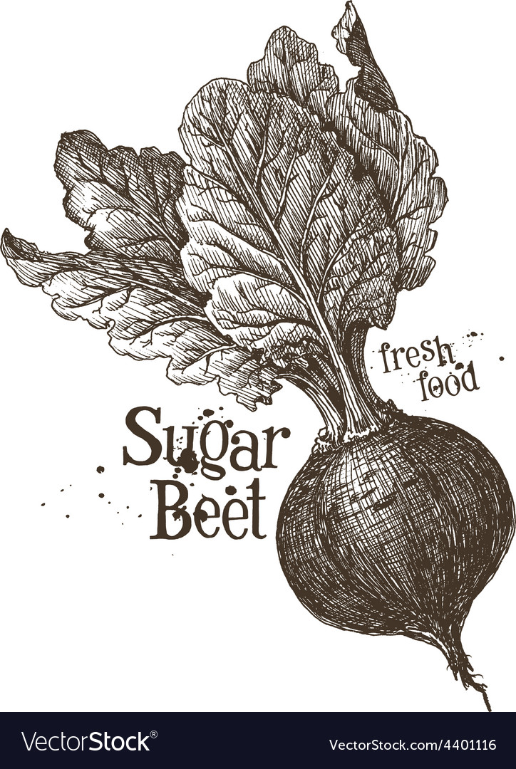 Beet logo design template fresh vegetables