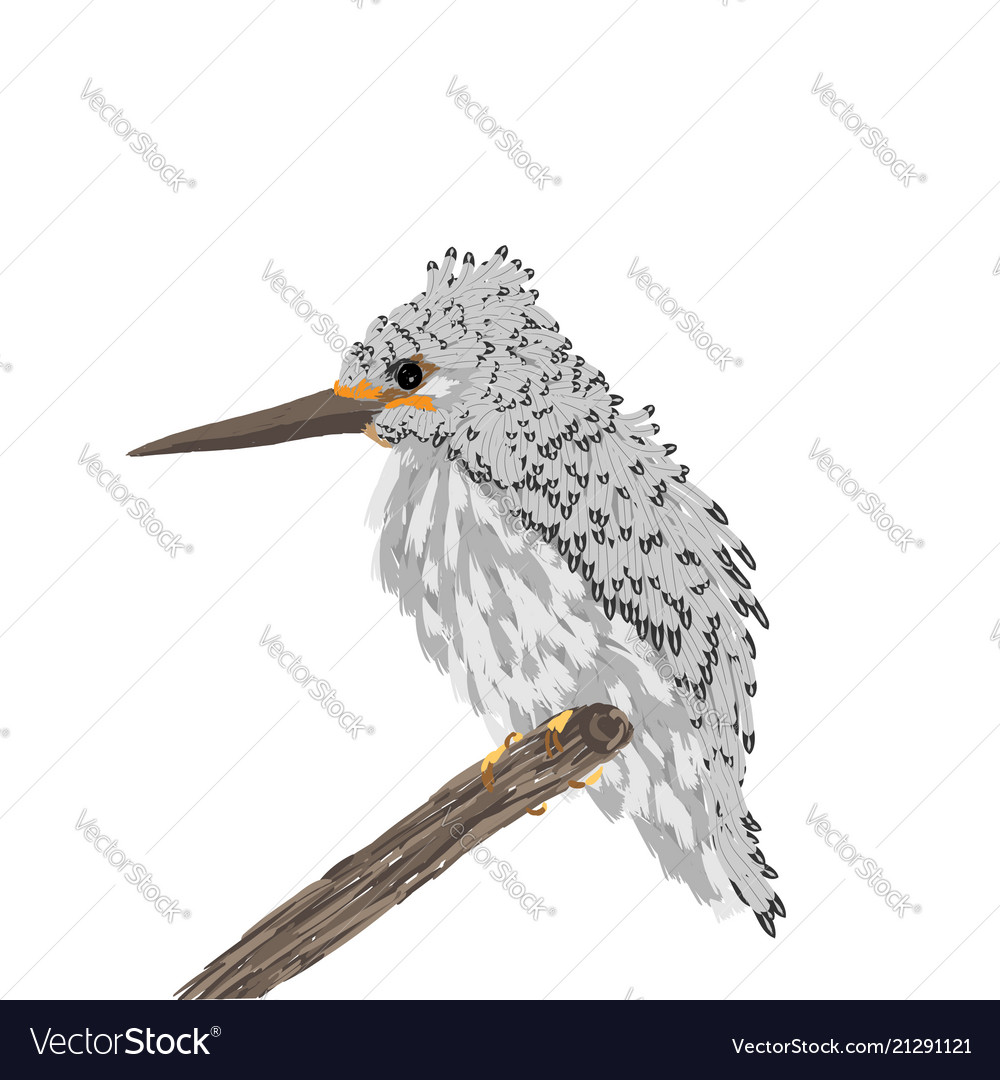 A small bird with a long beak sits on a branch