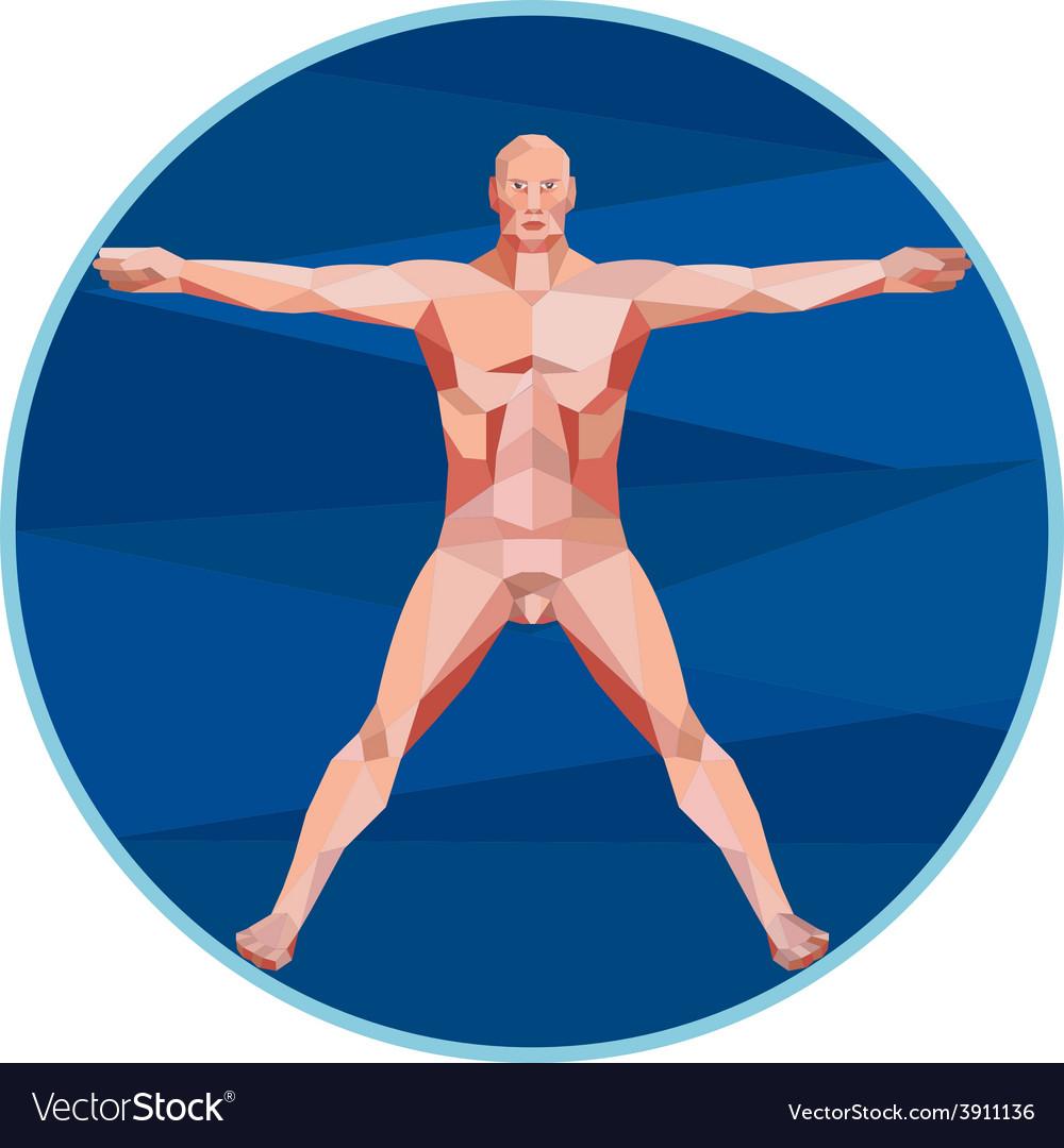 Da Vinci Man Anatomy Low Polygon vector image