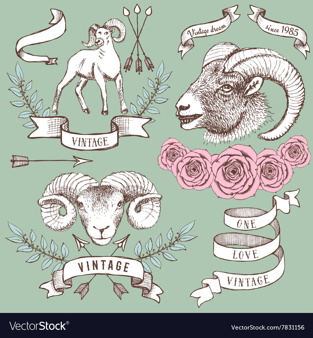 Logotypes with rams ribbons and roses vector image