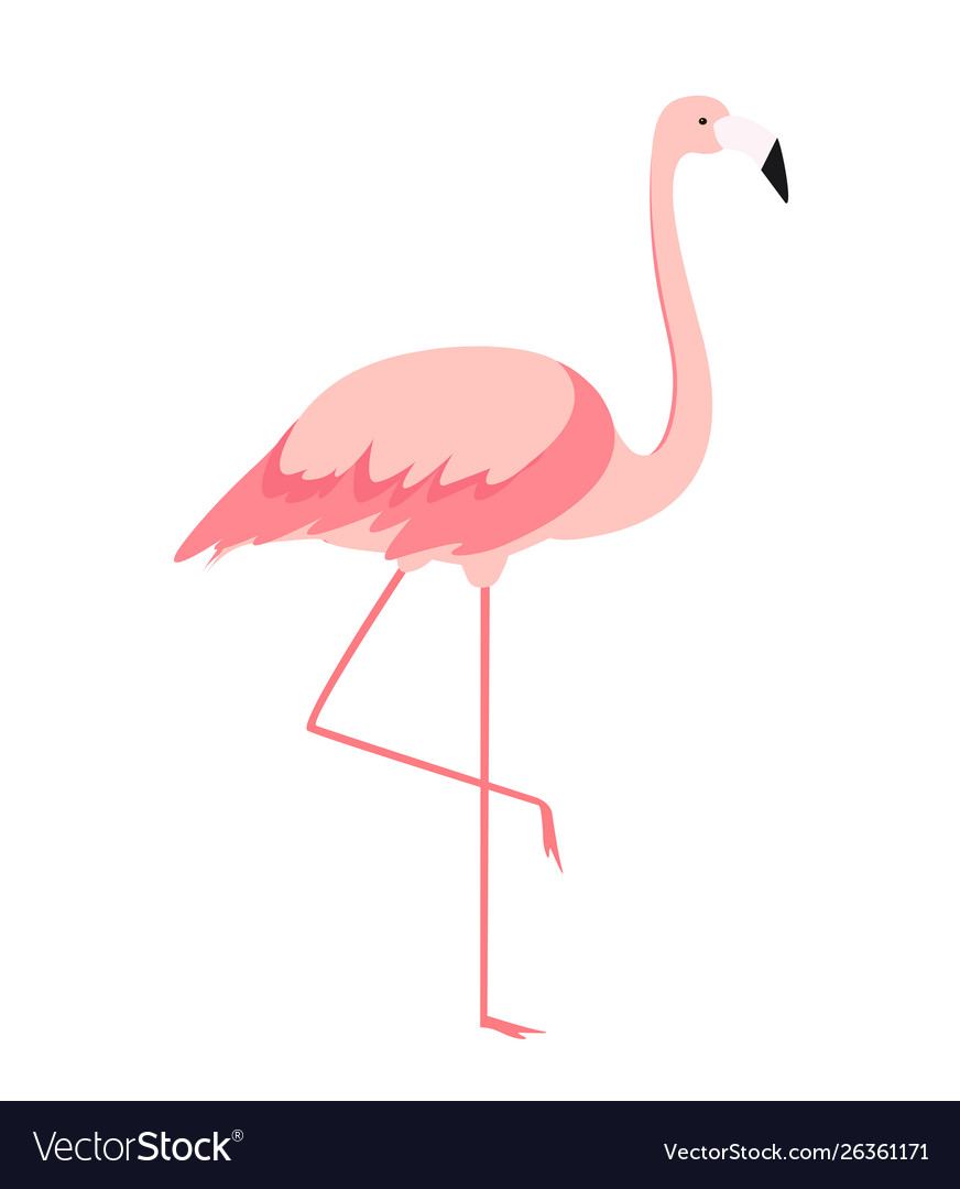 Colorful cartoon pink flamingo on one leg stands