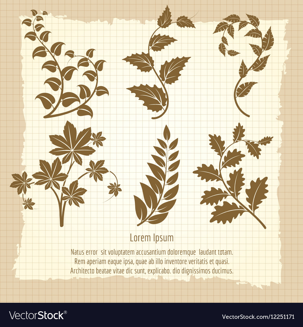 Vintage poster design with branches