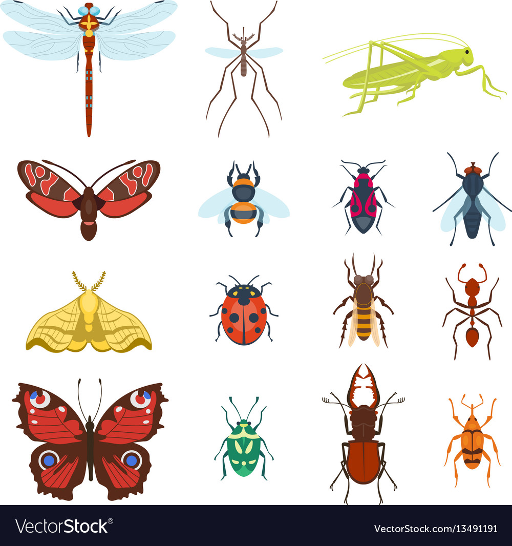 Colorful top view insects icons isolated on white