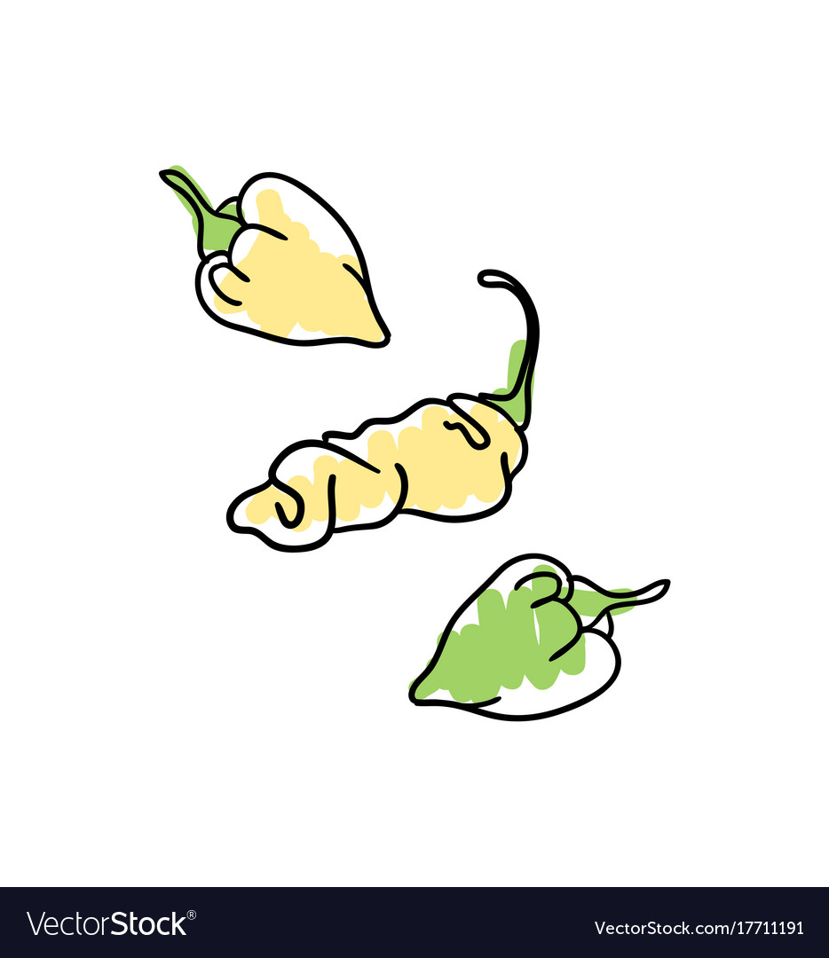 Fresh pepper hand drawn icon vector image