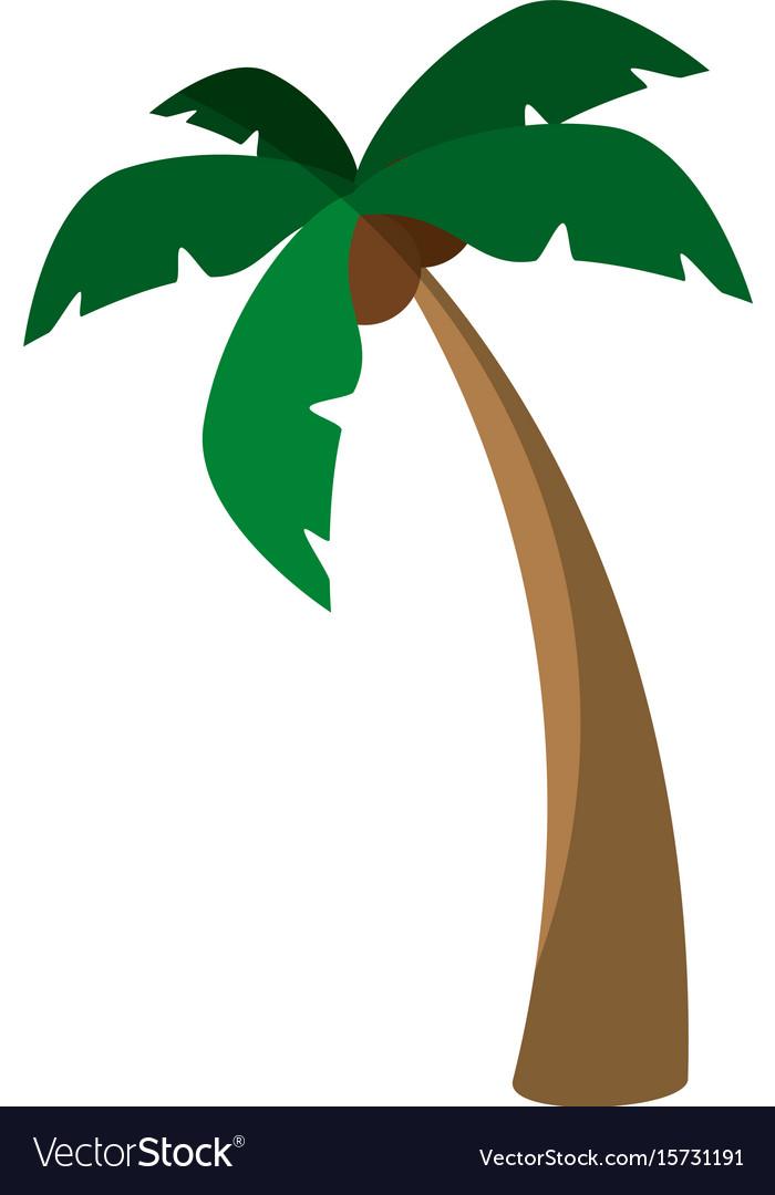 Island tree palms