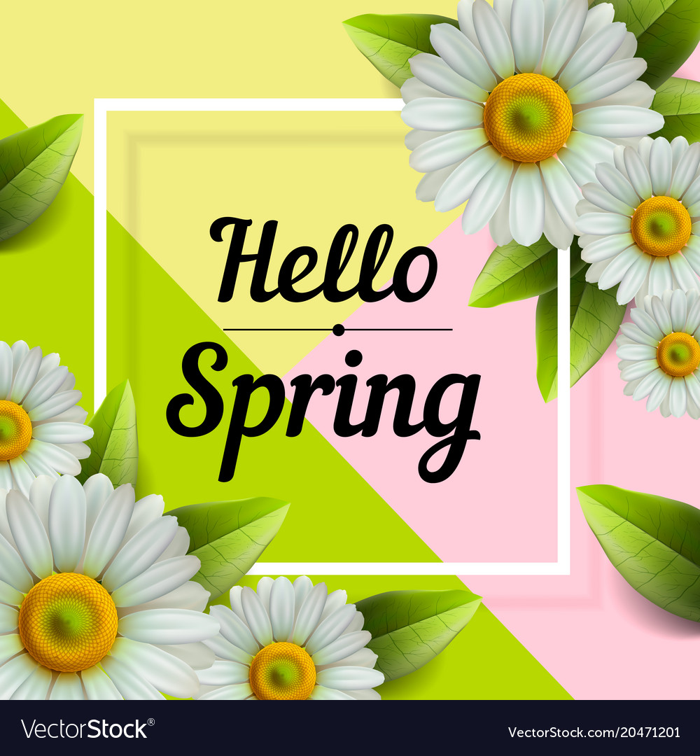 Hello spring hand lettering with daisy flower vector image izmirmasajfo