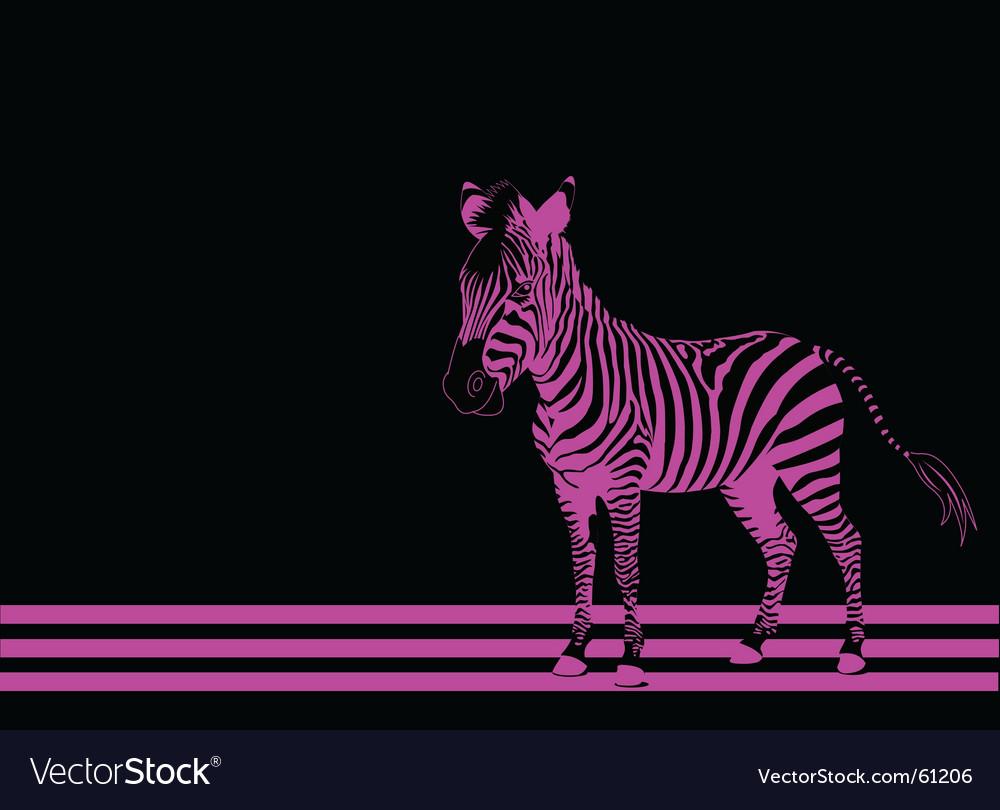Zebra pink vector image